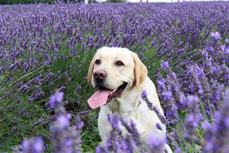 999759d11c86 The pick of the litter in pet care | Salon Source